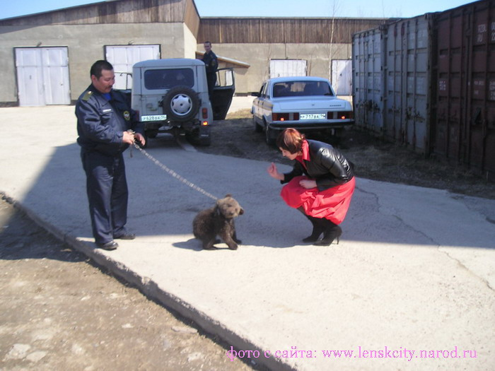Ленск медведи в городе